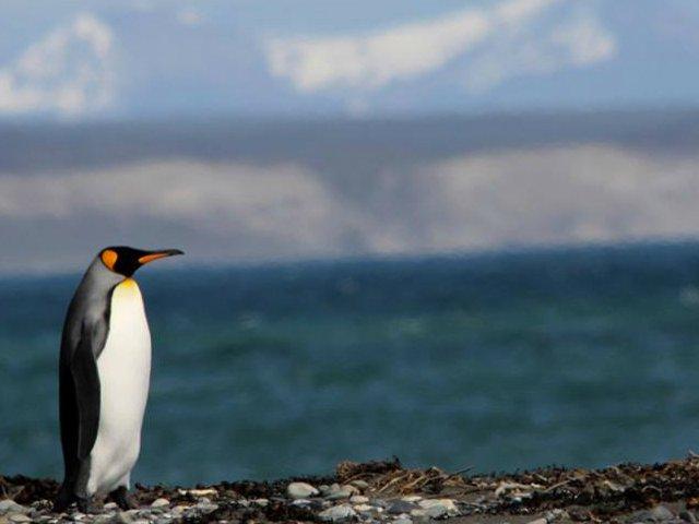 Navegação ao Canal de Beagle, Caminhada a Pinguineira