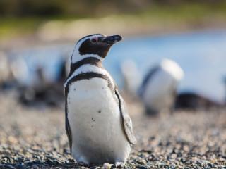 Caminhada com Pinguins na Ilha Martillo