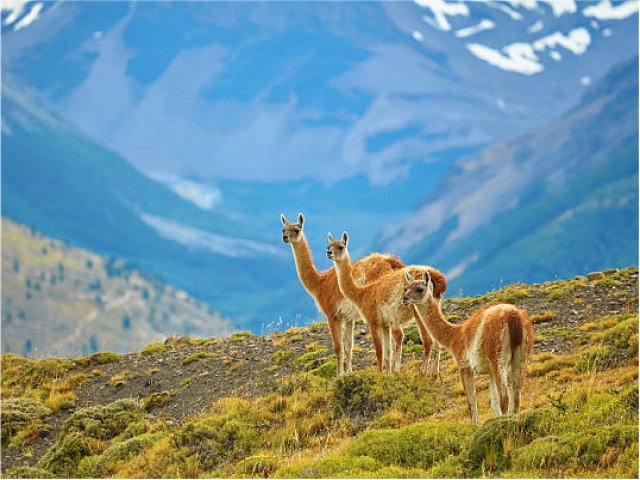 Voo rumo El Calafate: Cidade de Glaciares