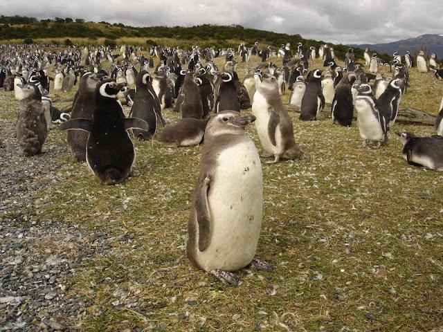 Excursão regular Estancia Haberton + Pinguineira Ilha Martillo (Incluí Entradas)