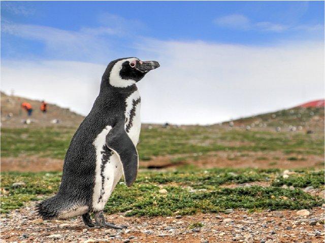 Navegação ao Canal de Beagle e visitação até as Pinguineiras!