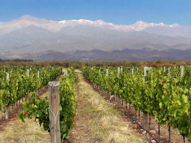 Passeio e degustação em uma vinícola tradicional da região